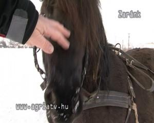 0127szanko_zarank_v